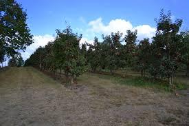 Pumpkin Patch Bellingham Wa by Apple Picking At Bellewood Acres U2013 Northwest Healthy Mama