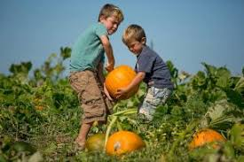 Pumpkin Picking In Ct by Why Fall Is The Best Season To Check Out Lyman Orchards In Connecticut