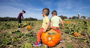 Lawrence Pumpkin Patch by Seasonal Tradition Schaake Pumpkin Patch Draws Third Generation