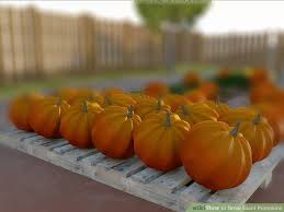 Natural Fertilizer For Pumpkins by 4 Ways To Grow Giant Pumpkins Wikihow
