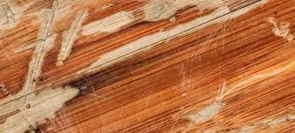how to repair buckled laminate flooring doityourself com