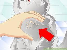 my cat has dandruff 3 ways to get rid of cat dandruff wikihow