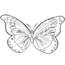 Butterfly Coloring Pages To Print Books For Adults Page