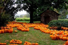 Local Pumpkin Farms In Nj by Bucks County Pick Your Own Pumpkins Pumpkin Patches