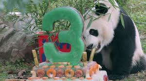 Giant Panda Bei Bei Celebrates His Third Birthday | Smithsonian's ... User Test Summary Globe Life Park In Arlington Where To Eat And Get Cheap Tickets 100 Parking Panda Yasminroohi Red Beam Garage C Promo Code New Images Spothero Vs Parkwhiz Airport Reservations Bestparking Memphis Zoo Hours Membership Prices Hotel Indigo Coupons Best Buy Return Policy Opened Tablet Letsgokids 201819 Perthwa Edition By Terry Wilson Issuu 5 Off Foodpanda Deliveries From 12 Fast Food Restaurants This May Allinone Point Of Sale Solution For Garages Lots Parkhero Tips Visiting Ocean Hong Kong With Kids Asia Travel Discount Parking Ladelphia Airport Hotels Denton Tx