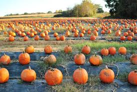 Chesterfield Pumpkin Patch 2015 by 2011 October