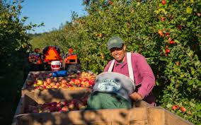Pumpkin Picking Ridge Ny by The 19 Best Places To Go Apple Picking In The United States