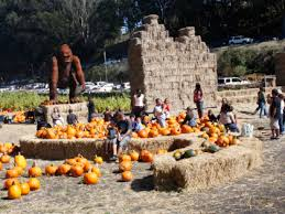 Pumpkin Patch San Jose 2017 by Best Corn And Hay Mazes Near The Peninsula Cbs San Francisco