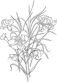 Clove Pink Carnation Flower Colouring Page