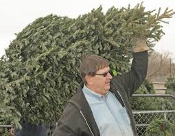 Kinds Of Christmas Trees by Wide Variety Of Christmas Trees For Sale Around Billings Local