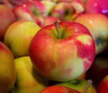 Best Pumpkin Apple Picking Long Island Ny by Best Places For Apple Picking With Kids In Westchester And
