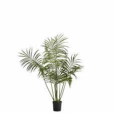 flora kentia palme h130 cm grün