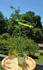 orchidées vanilla mohea vente en ligne de vanille grands crus