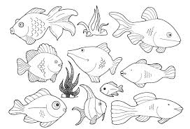 Wonderful Looking Fish Pictures To Color Colour