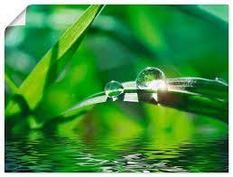 artland wandbild grüner hintergrund mit gras gräser 1 stück in vielen größen produktarten alubild outdoorbild für den außenbereich