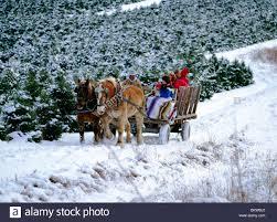 Leyland Cypress Christmas Tree Farm by Christmas Tree Farm Usa Stock Photos U0026 Christmas Tree Farm Usa