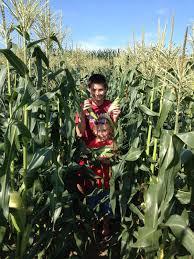 Buchheit Agri | Blog