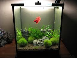 Spongebob Fish Tank Decor Set by Spiffy Pet Products Betta Fish Tank Setup Ideas That Make A