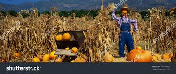 Pumpkin Patch Pasadena Area by This Pumpkin Patch There Scarecrow Straw Stock Photo 102083323