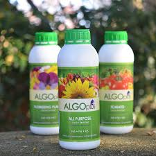 Fertilizer For Pumpkins And Watermelons by Algoflash All Purpose Plus Fertilizer From Park Seed