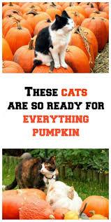 Minecraft Growing Pumpkins by The 25 Best Pumpkin Farm Ideas On Pinterest A Maze In Corn