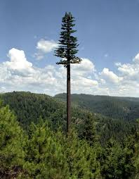 This is not just a really really tall tree