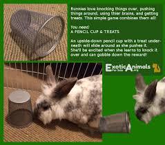 best 25 rabbit toys ideas on pinterest rabbit ideas pet rabbit