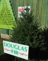 Canaan Fir Christmas Tree Needle Retention by Pam U0027s English Cottage Garden O Christmas Tree