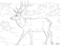 Click The Tule Elk Deer Coloring Pages To View Printable