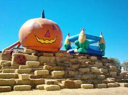 Rileys Pumpkin Patch Pittsburgh by 10 Great Pumpkin Patches In Nevada