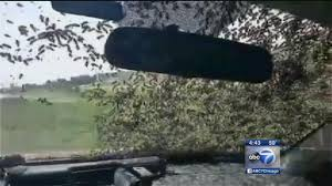 Bees Swarm Oklahoma Highway After Truck Crashes | Abc7chicago.com Arnia Hive Monitors On Twitter Apimondia2017 Tech Tour Bee Lorry Bee Busters Truck Moving Bees Is Not Easy Slide Ridge Notes Video Driver Cited In Truck Crash 6abccom Brown Cat Bakery Transport Meet The Biobee Youtube Why Are So Many Trucks Tipping Over The Awl 14 Million Spilled I5 Everybodys Been Stung Honeybees Travel 1000 Miles To Pollinate Nations Crops Bbj Today 2018 Hino 817 4x4 Flat Deck