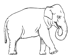 African Elephant Coloring Free Animal Pages Sheets