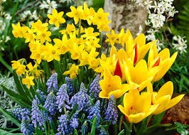 plant flower bulbs now before the garden club