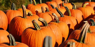 Pumpkin Patch Near Greenville Nc by Buy Nc Pumpkins And Mums From Porter Farms Near Kinston Nc