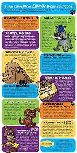 Big Dogs That Shed The Least by Glands In Dogs An Illness You May Not Know About But Should