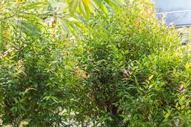 100 Fresh Home And Garden Fresh Green Tree With Rence Of Home In Garden