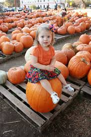 Norms Pumpkin Patch Death by Gonna Need A Bigger Boat October 2013