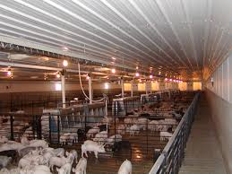 Hog Confinements: Bishop Radiant Heating Systems Davis County Fair Rentals Betco Swine Buildings Youtube Hog Haven Farrowing House Luco Manufacturing Floyd Asks Dnr To Investigate Rudd Hog Confinement North Murray Cstruction Home Repair And Improvement Fishback Building Hoppe Pole Barns Panel First Week As A Pig Farmer Casey Author Developer Designer Growdisk Feed System Slat Geidel Brothers Active In Operation Creston News Advtiser Homestead Barn The Farm Pinterest Homesteads