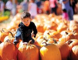 Pumpkin Patch Fresno Ca Hours by Lots Of Friendly Family Fun Yelp
