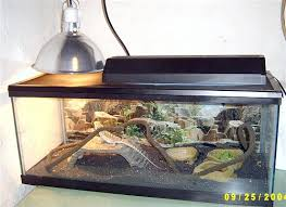 Bearded Dragon Heat Lamp Went Out by Bearded Dragon Recoverin Fig4 Recovering From Mbd Under High Uvb