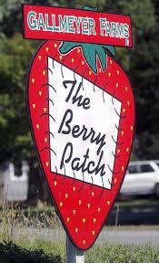 Pumpkin Picking Richmond Hill by Lohmann Gallmeyer Family U0027s Berry Patch In Eastern Henrico