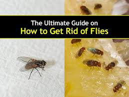 Elegant How To Get Rid Of Flies In Your Backyard | Architecture-Nice How To Get Rid Of Flies In Backyard Outdoor Goods Diy Using Pine Sol To Of House Youtube 25 Unique What Kills Fruit Flies Ideas On Pinterest Pest Keep Away Repellent Rid Rotline Do I Get Solana Center For 3 Ways Around Your Dogs Water And Food Bowls Fruit Kill Do You Chicken Coop For Happier Hens Coops Those Pesky Flies From Pnic Areas Easy Home Remedy Coping With The Fall The New York Times Outdoors Step By