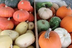 Pumpkin Picking Near Lancaster Pa by Farm Wagon Produce East Earl Pa Lancaster County Farm Market