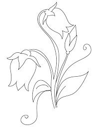Campanula Flowers Coloring Page