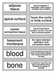Flash Cards To Reinforce The Vocabulary Of Tissues Or Histology For Anatomy This Can Be Used In Conjunction With Word Search Cross