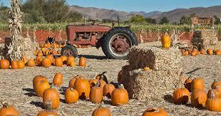 Hamilton Ohio Pumpkin Festival by Niederman Family Farm Fall Festival