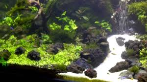 Under Water Waterfall Aquascape - YouTube Photo Planted Axolotl Aquascape Tank Caudataorg Suitable Plants Aqua Rebell Tutorial Natures Chaos By James Findley The Making Aquascaping Aquarium Ideas From Aquatics Live 2012 Part 4 Youtube October 2010 Of The Month Ikebana Aquascaping World Public Search Preserveio Need Some Advice On My Planned Aquascape Forum 100 Cave Aquariums And Photography Setup Seriesroot A Tree Animalia Kingdom Show My Our Lovely 28l Continuity Video Gallery Green 90p Iwagumi Rock Garden Page 8