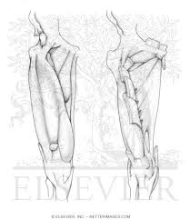 Winsome Inspiration Netters Anatomy Coloring Book Welcome To Netter Images
