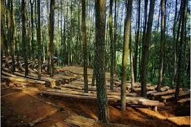 Screenshot Instagram Com 2016 10 05 11 Cara Menuju Hutan Pinus Mangunan Dlingo