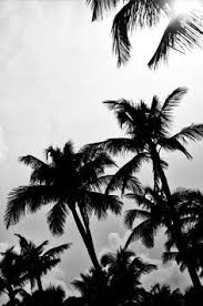 Black And White Art Print By Cattie Coyle Photography Palm Trees No 1